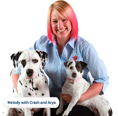 Pet Express Is A Pet Travel Agency That Specializes In Domestic And