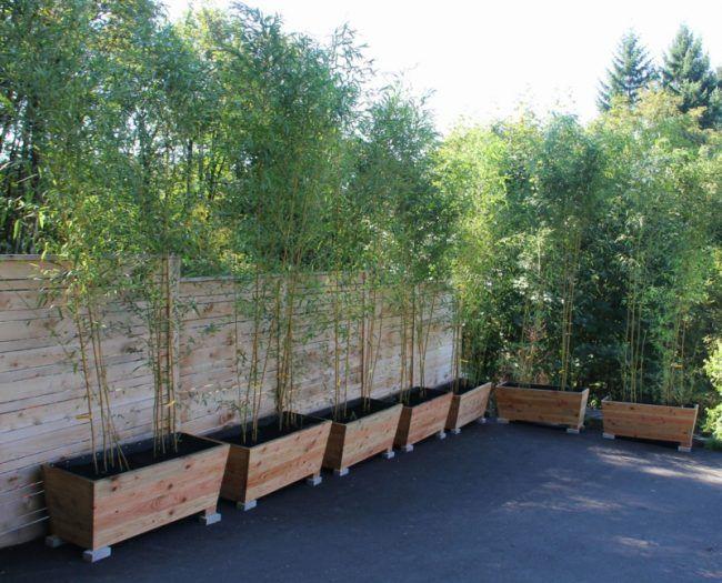 Bambus Im Garten Diy Sichtschutz Idee Pflanzkuebel Terrasse Pots