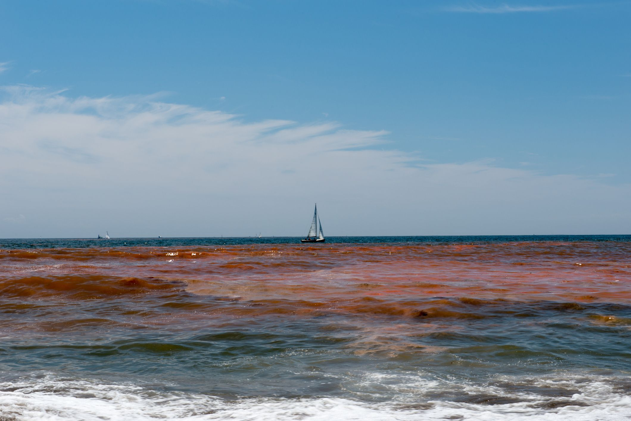 What S Going On With Red Tide Research Https Www2 Floridarealtors Org News Media News Ar Panama City Beach Florida Panama City Beach Real Estate Photography