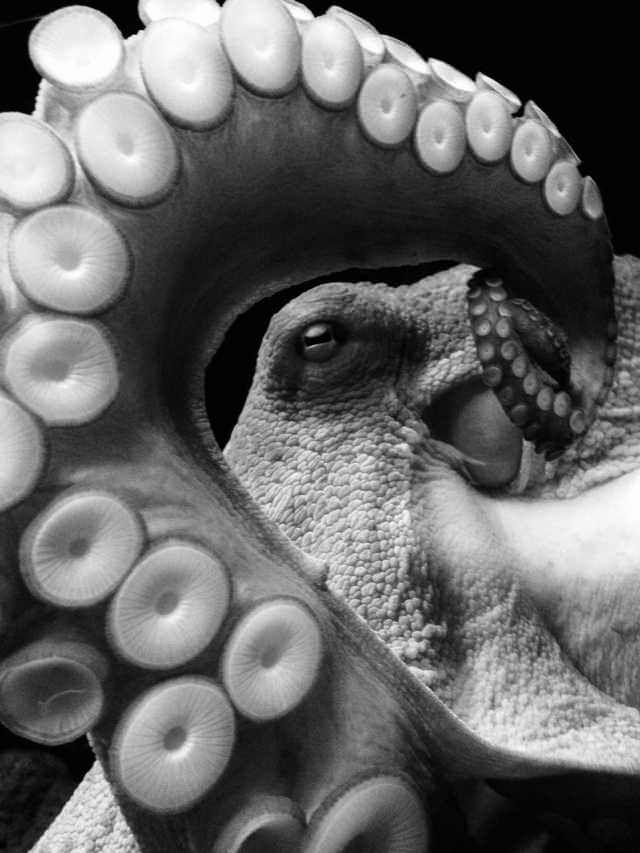 Photo of ITAP of an octopus at the aquarium