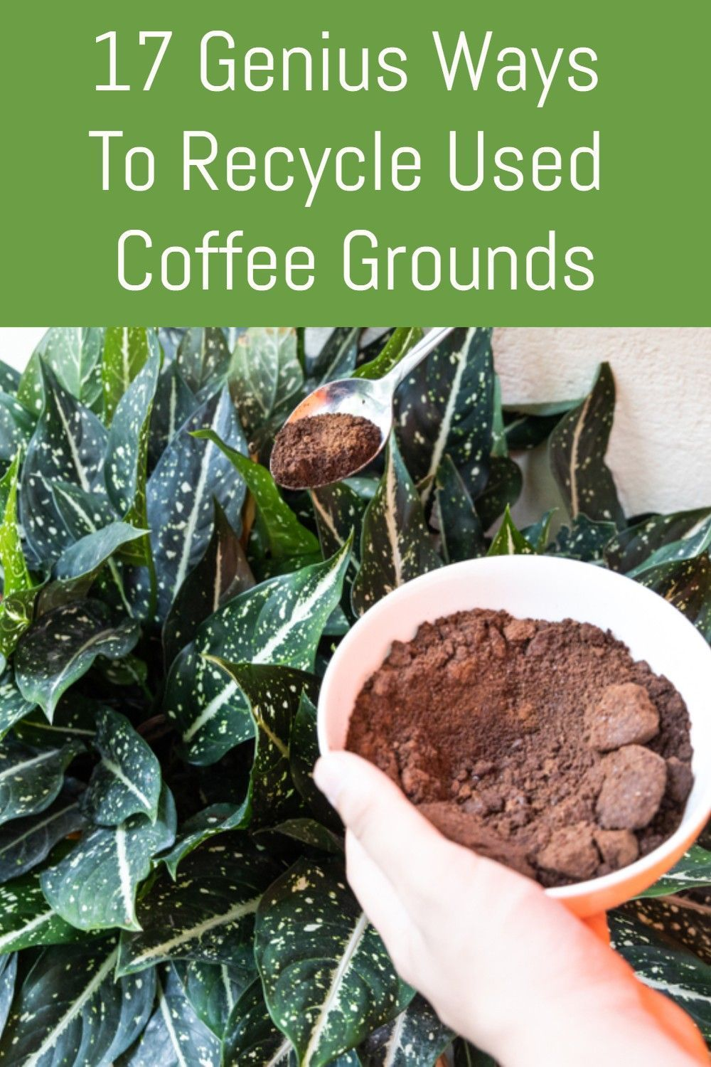 17 Genius Ways To Recycle Used Coffee Grounds in 2020