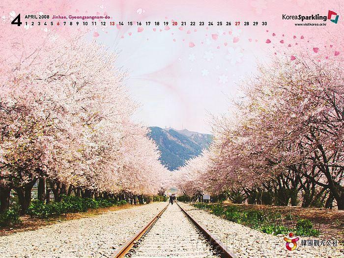 I Really Really Hope I Can See Something Like This Someday Korea Travel South Korea Travel Korea Tourism