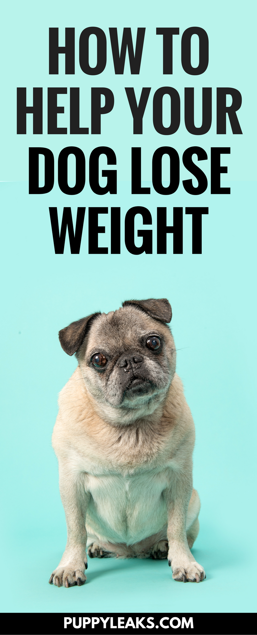 5 tips to help your dog lose weight | puppy leaks | pinterest | dogs