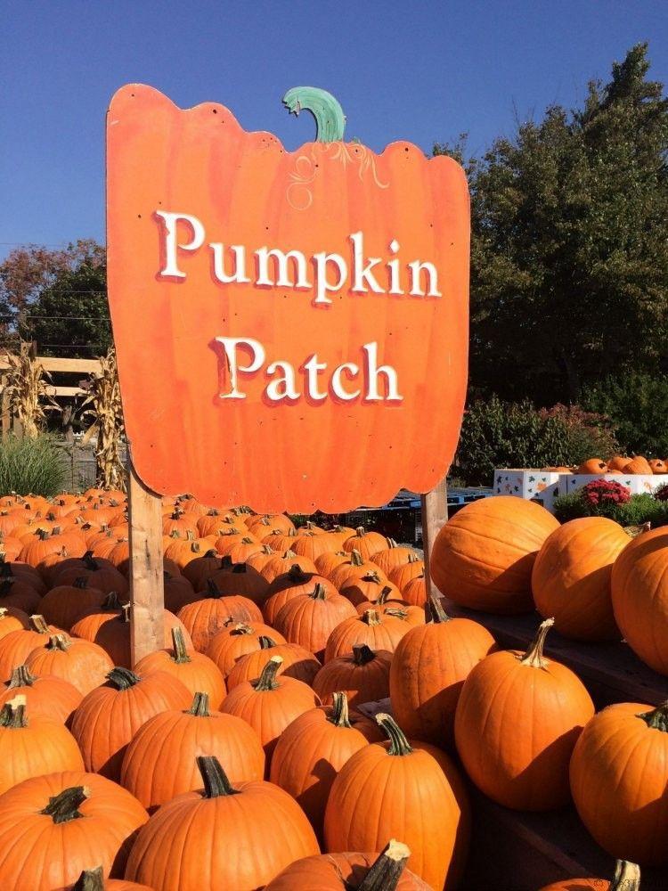☆pinterest || zoewal16☆ in 2020 | Pumpkin painting party, Pumpkin patch,  Fall halloween decor