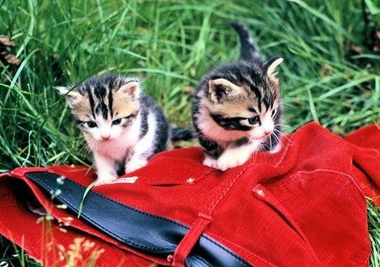 lâchés dans le jardin, les chatons découvrent les joies des ballades dans