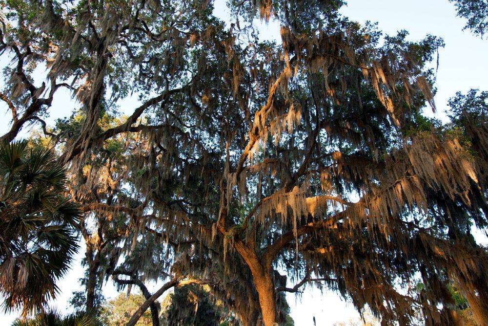 Park Art|My WordPress Blog_Tools For A Time Jacksonville Fl 32257