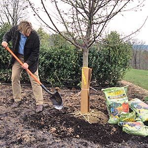 Merveilleux Amending Clay Soil