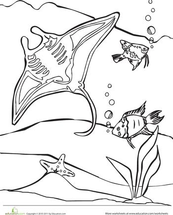 Color The Manta Ray Worksheet Education Com Ocean Coloring Pages Manta Ray Color