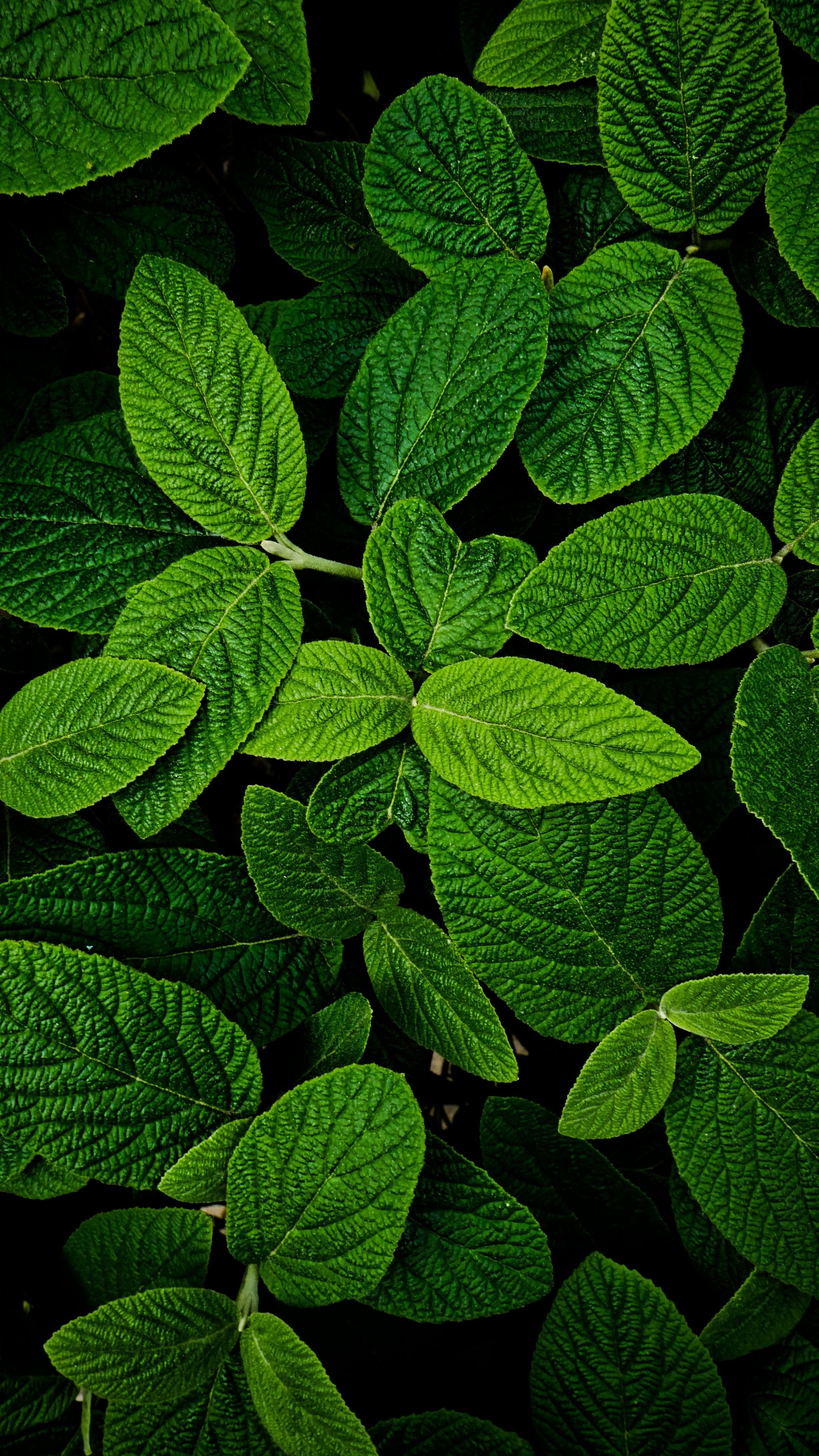 Leaves, macro, bright and green, 2160x3840 wallpaper