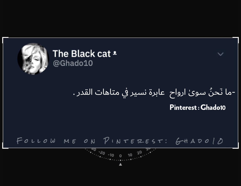 Pin By رمزيات On رمزيات Black Cat Lol Follow Me