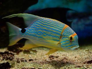 Pin On Reef Life