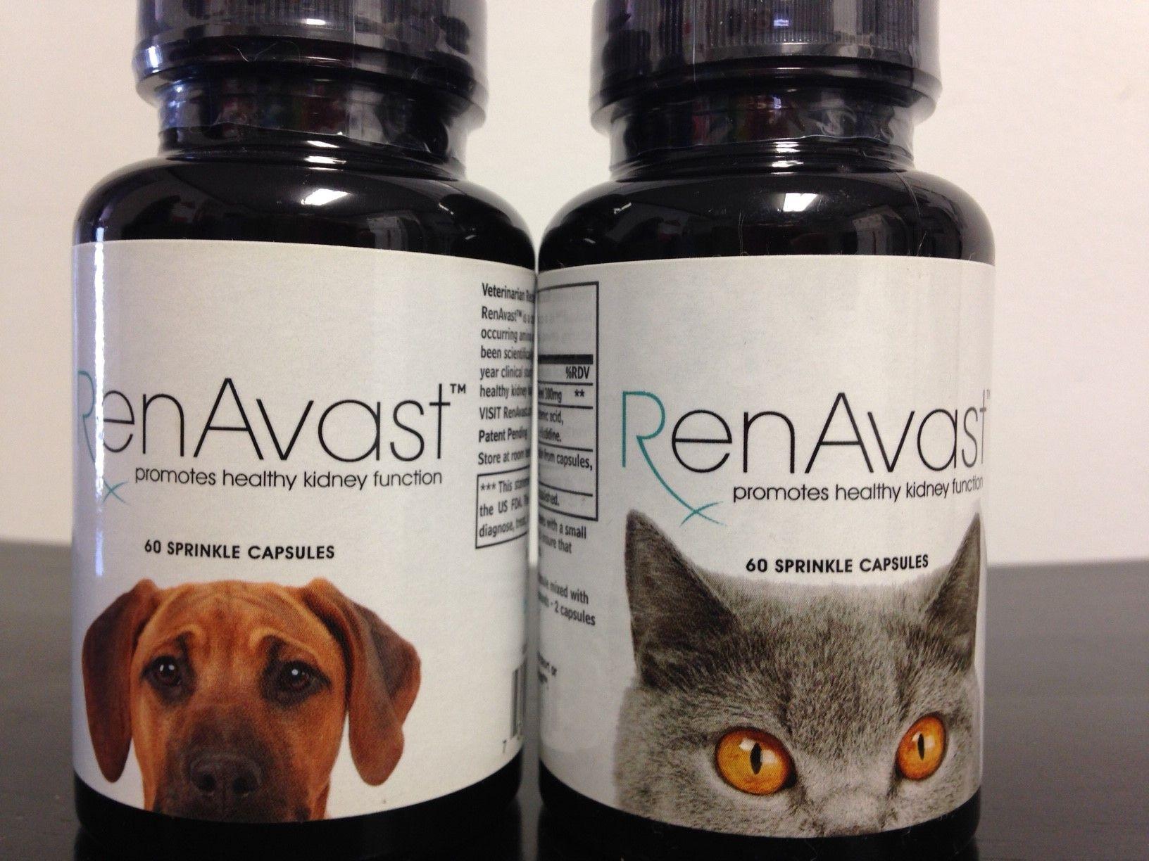 Renavastfeline Cat Diseases Healthy Pets Healthy Kidneys