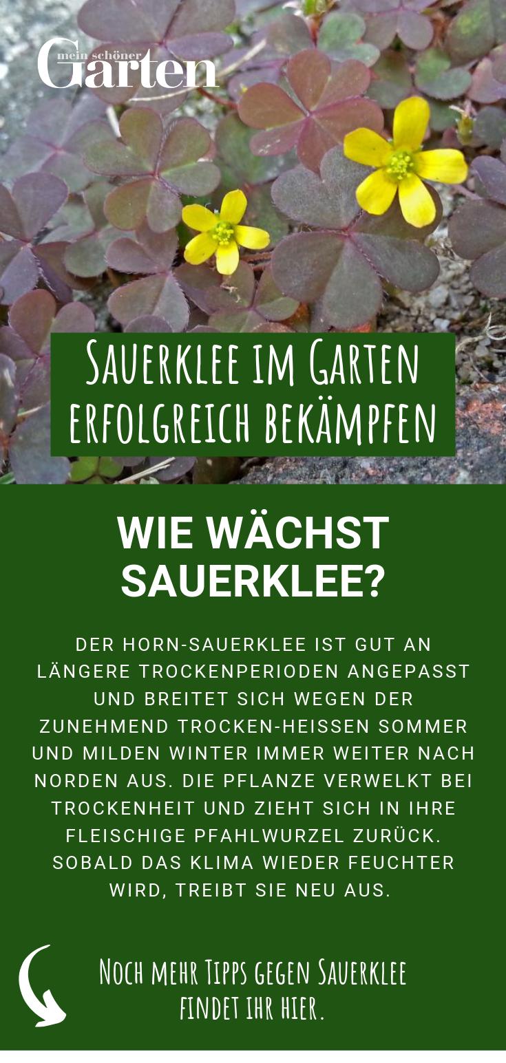 Sauerklee Bekampfen Wie Wachst Sauerklee Unkraut Im Garten Ziergarten Garten