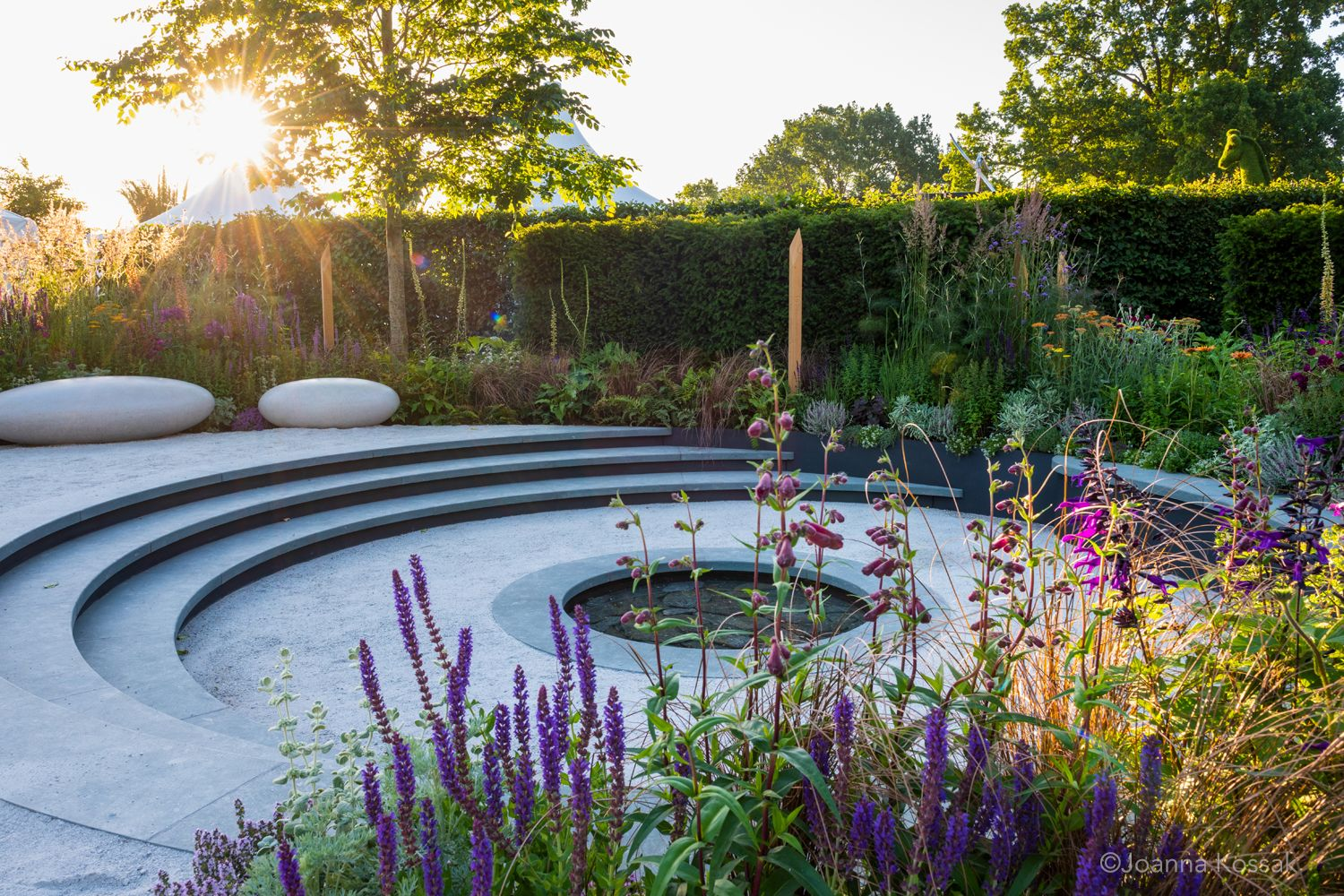 Pin by Dr Proctor on Shilling hill   Rhs hampton court ...