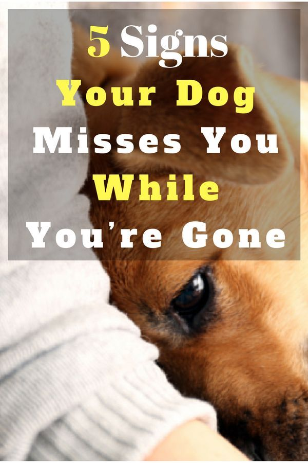 Top 5 Signs Your Dog Misses You While You Re Gone Dogs Dogs