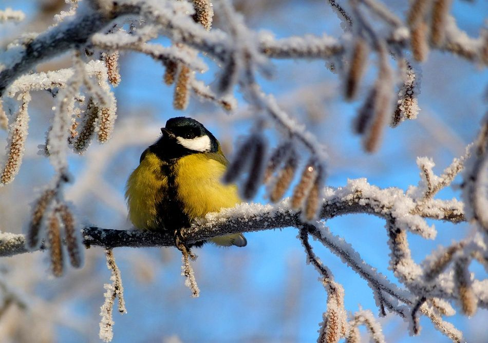 Потрясающие фотографии зимней природы   Природа, Животные ...