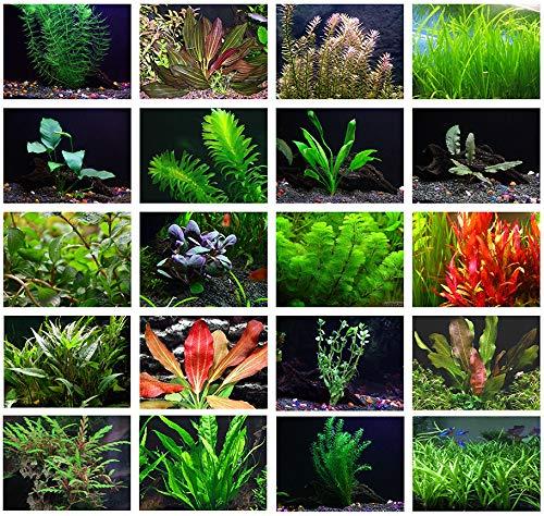 Texas Aquarium Plant Bundle 20 Species Live Aquarium Plants Package Live Aquarium Plants Planted Aquarium Plants