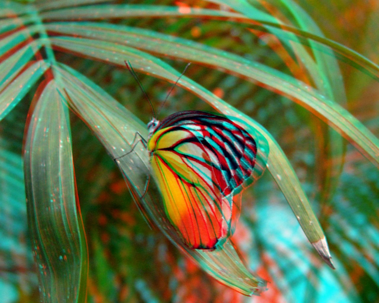 anaglyph nature Google Search Fish pet, Plant leaves