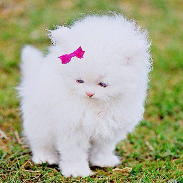 Cats Cat Kittens Kitten Kitty Pets Pet Meow Moe Cutecats Cutecat Cutekittens Cutekitten Meowmoe Cute Animals Animals Baby Animals