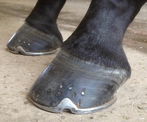 Farrier Jim Hayter Wins Burghley Horse Trials' Best Shod