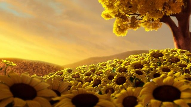 bed of sunflowers : )