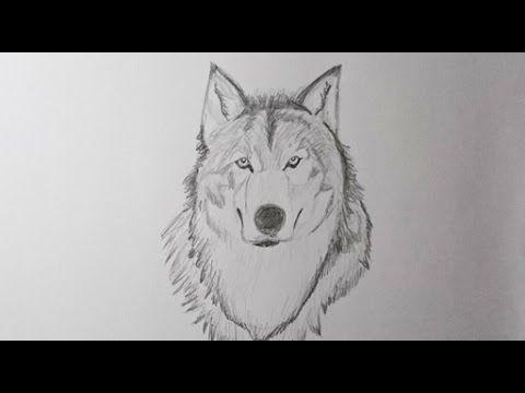Como Dibujar Un Lobo Paso A Paso How To Draw A Wolf Step By Step Como Dibujar Un Lobo Lobo Gris Lobo Dibujo Facil