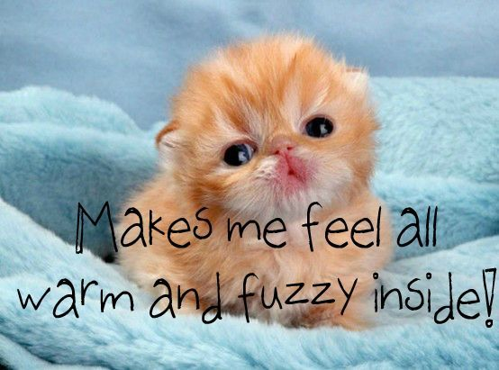 warm and fuzzy inside | Baby animals, Cute animals, Funny animals