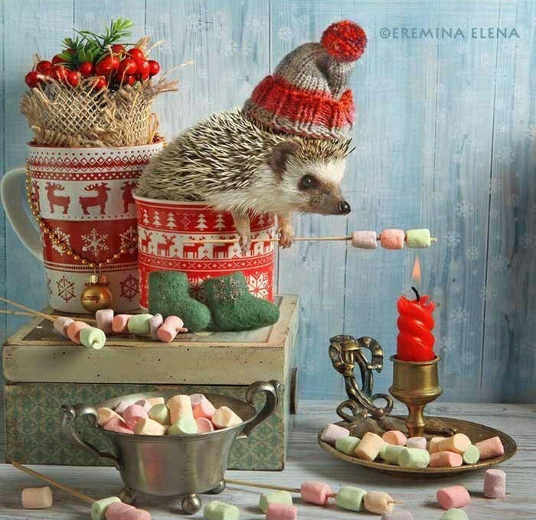 Pin By Andrea Hahnemann On Suni Cute Hedgehog Christmas Animals Happy Hedgehog