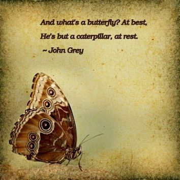 Quotes Butterfly Kisses Quotes Images Of Butterflies Quotes About