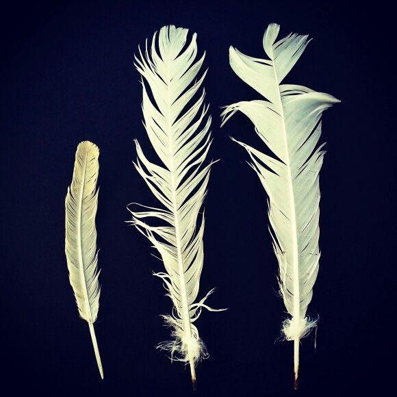 Trio feathers