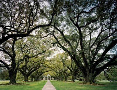 southern plantation.