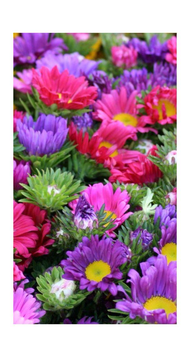 ورود ملونه خلفيه Beautiful Flowers Pretty Flowers Flower Farmer