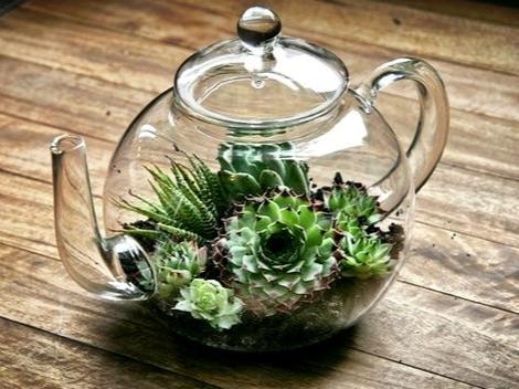Love this idea of a terrarium in a glass teapot.
