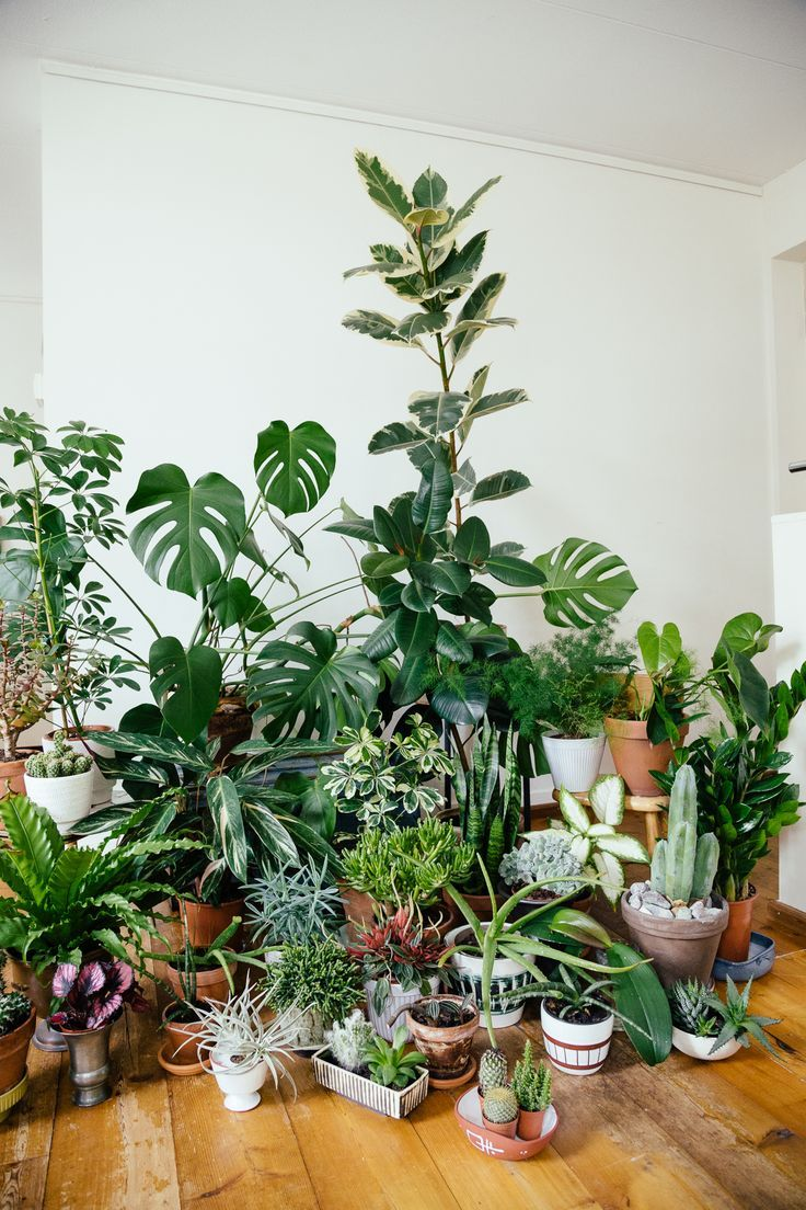 sumptuous design ideas green house plant identification. Urban Jungle  plants vegetal green mood home Plant gang in urban jungle interieur Bucket List Pinterest