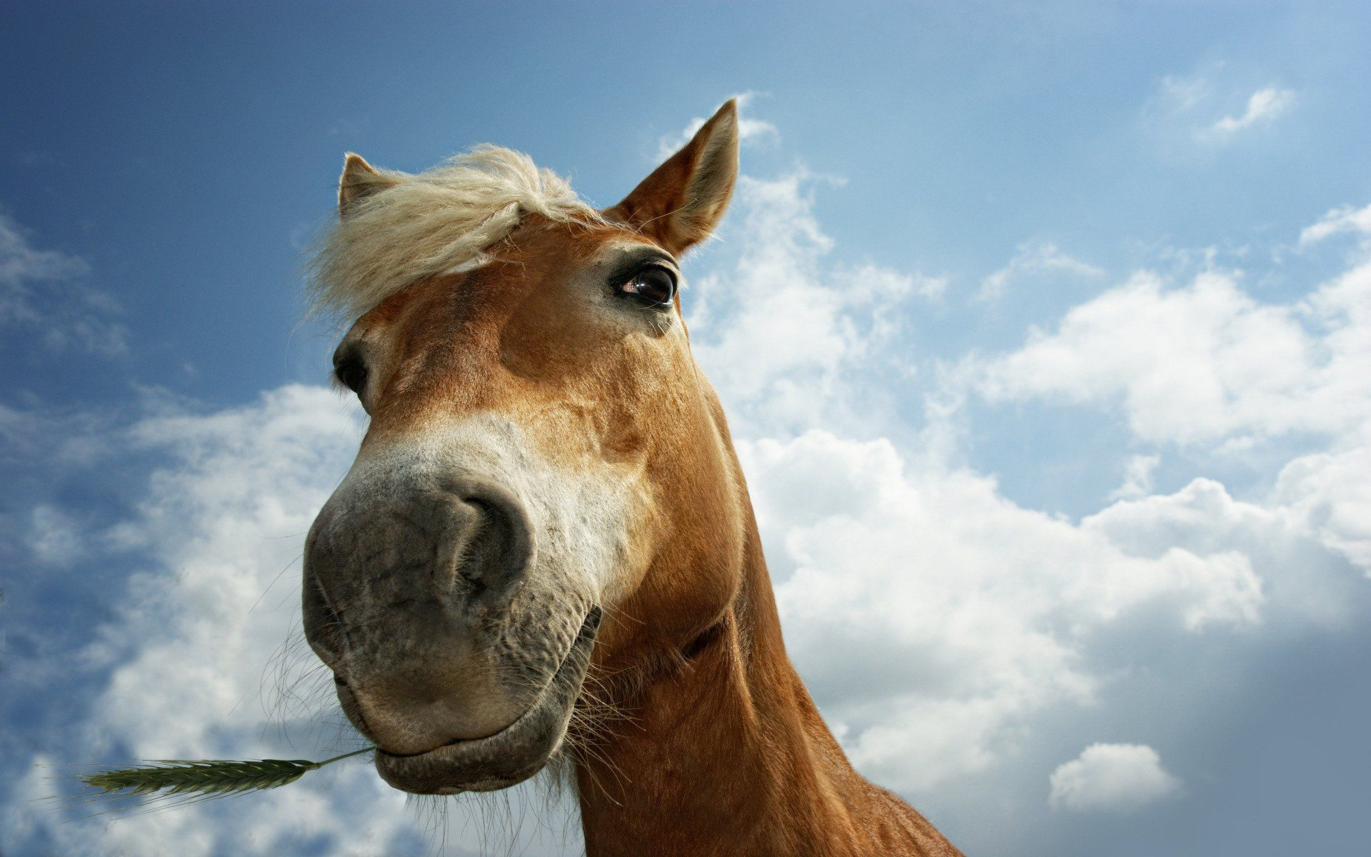 Funny Horse Funny Horse Closeup Wallpapers Pictures