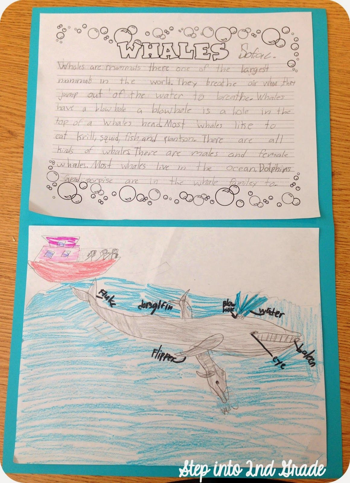 Writing About Whales Whale Research Animal Research