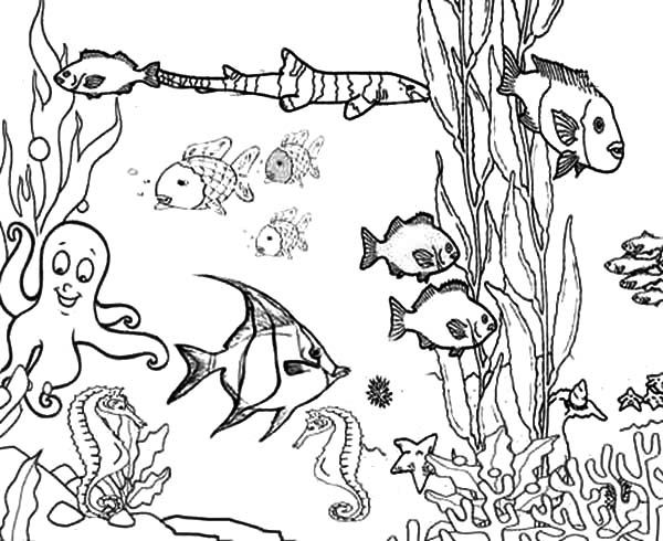 free printable ocean coloring pages free coloring pages of ocean plants coloring page - Free Color Printables