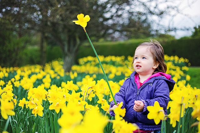 Daffodil by Sigita JP on Flickr.