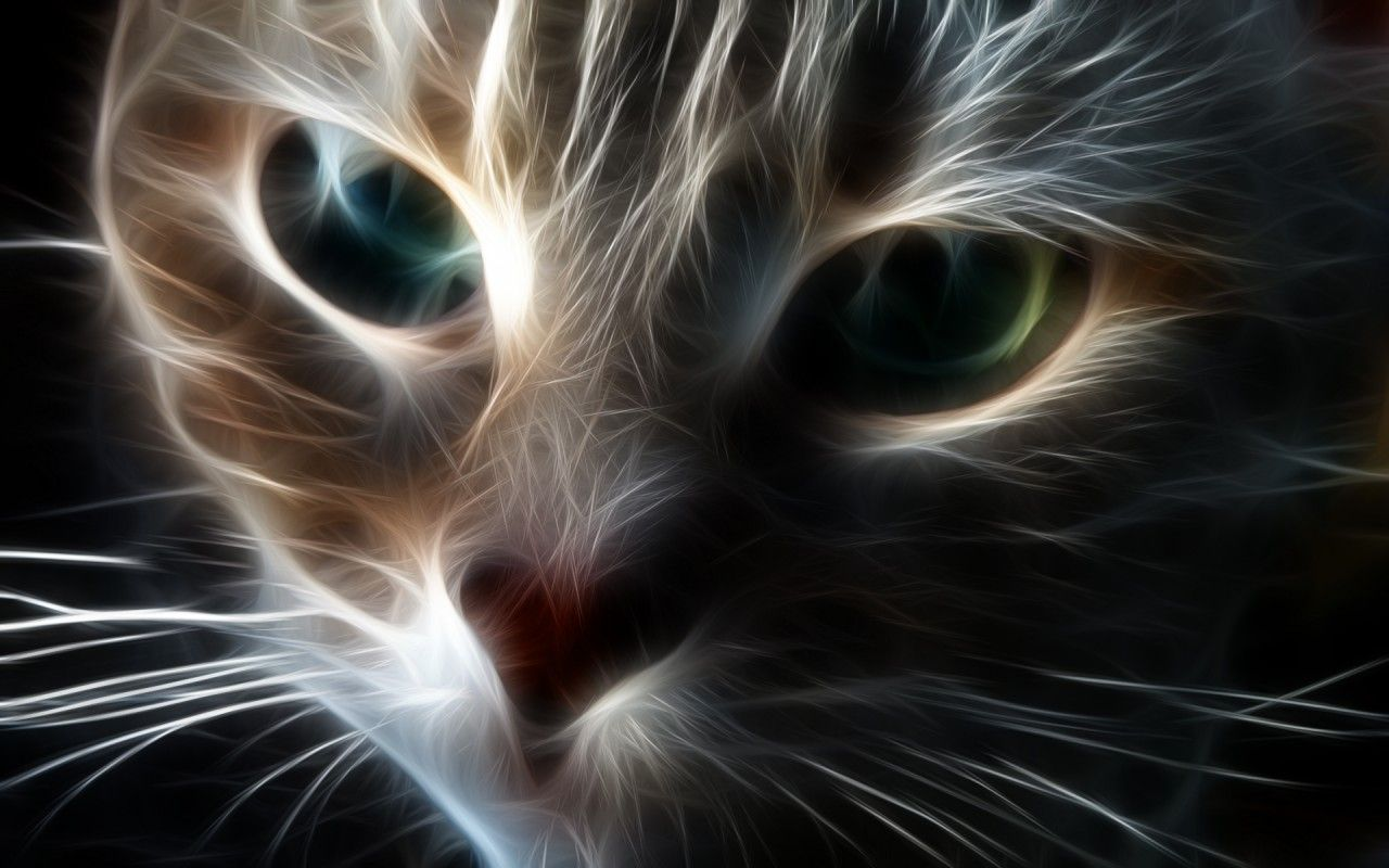 Animated cat screensavers animated free cat wallpaper - Cool backgrounds of cats ...