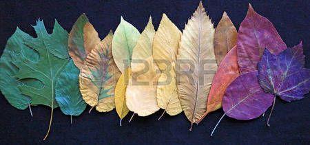 foglie: Fila di foglie colorate