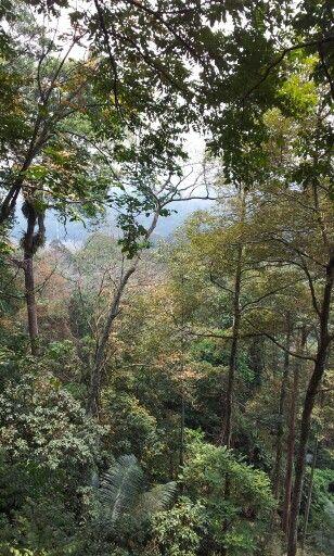 Canopy walking FRIM & Canopy walking FRIM | Malaysia | Pinterest | Canopy and Malaysia