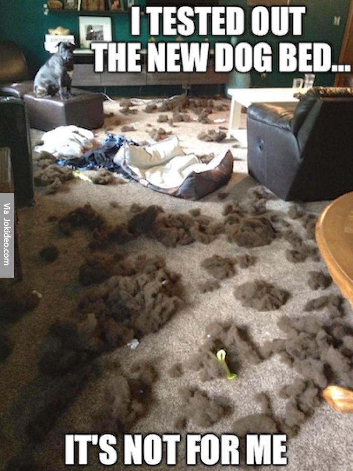 Funny Dog Joke Meme : I tested out the new dog bed meme http