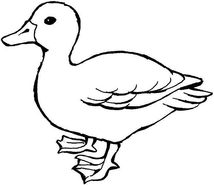 Coloring Pages Duck : Duck with legs wide dolphins pinterest kids net