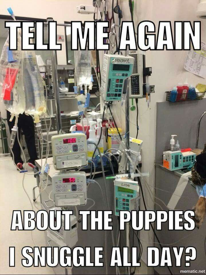 Vet Tech Meme With Images Vet Tech Student Vet Medicine Vet