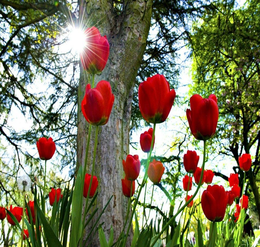 Pin By Mortada Moafak On طبيعة Flowers Beautiful Flowers