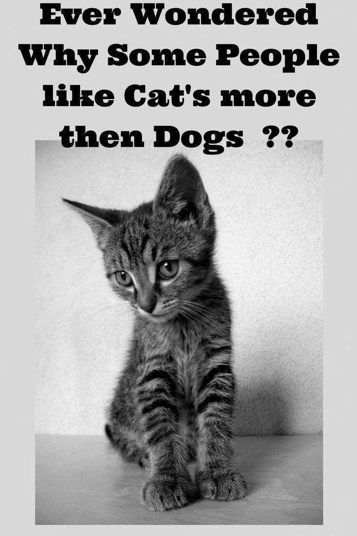 Craigslist Kittens For Sale