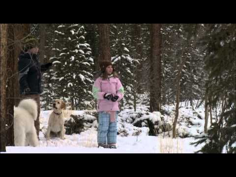 The Dog Who Saved Christmas Vacation - YouTube | videos | Pinterest