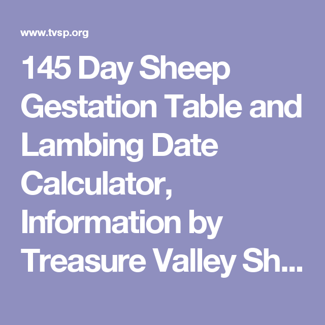 145 Day Sheep Gestation Table And Lambing Date Calculator
