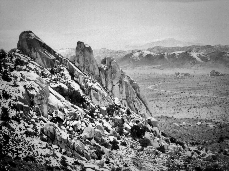 Desert - Landscape Joshua Tree California Black And White Vintage