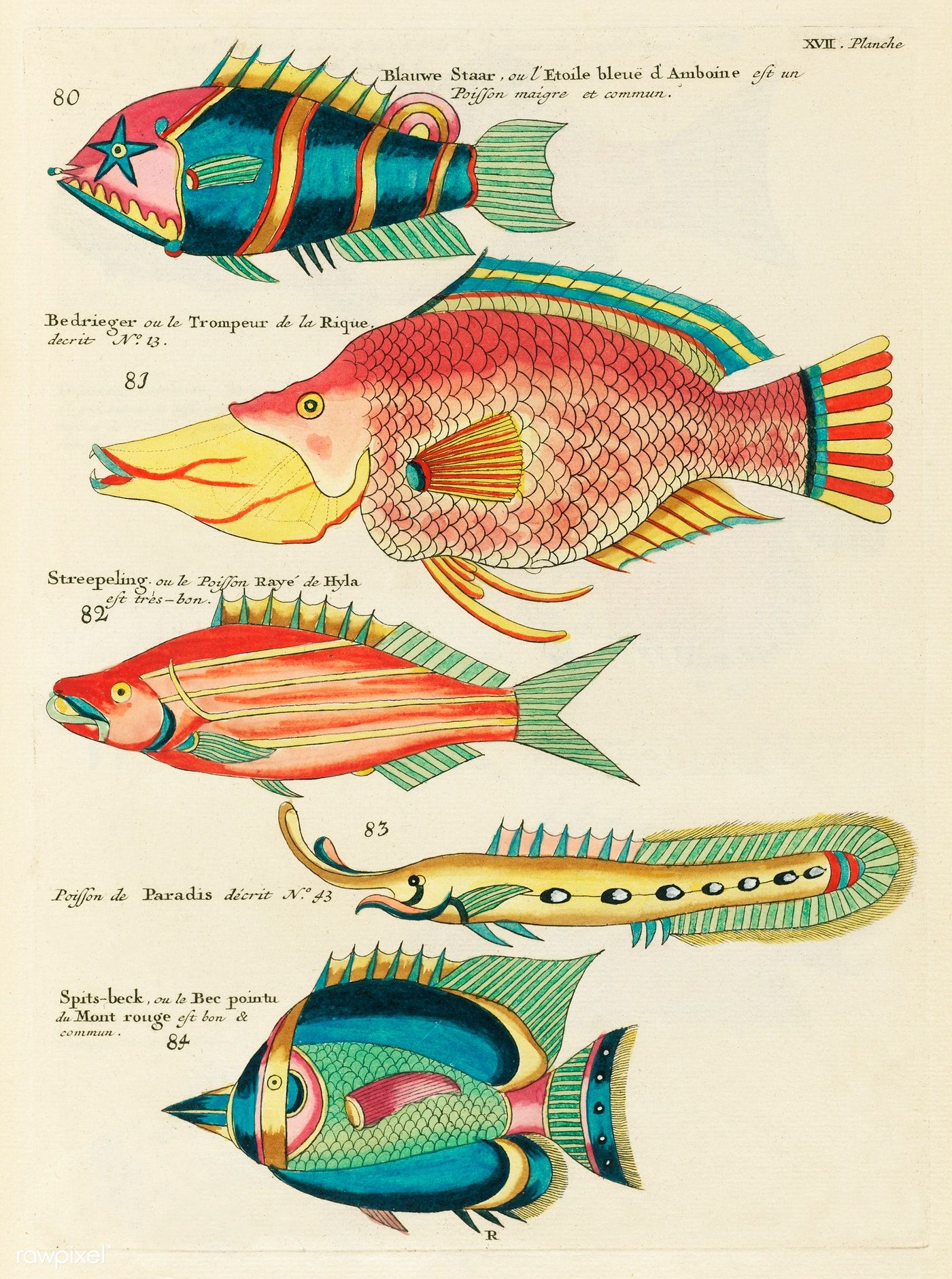 Colourful And Surreal Illustrations Of Fishes Found In
